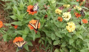 manybutterflies